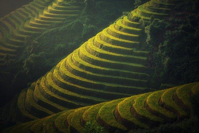 rýžová pole.jpg